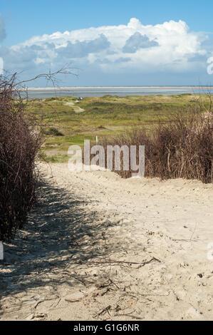 Sandy footpath with willow twig fences on the island Borkum, Lower Saxony, Germany. - Stock Photo