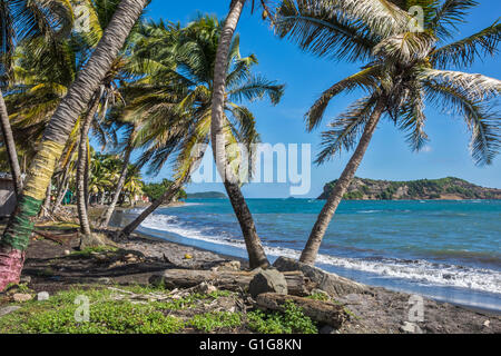 Palm Trees On The Beach Grenada West Indies - Stock Photo