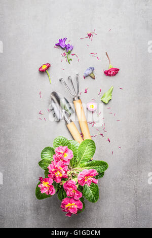 Garden tools with flowers  on gray stone concrete background, top view composing - Stock Photo