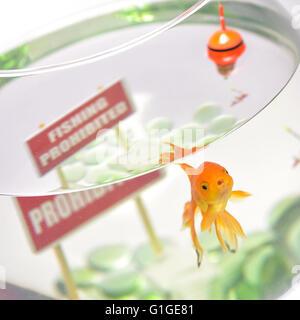 Goldfish in aquarium isolated on white background - Stock Photo
