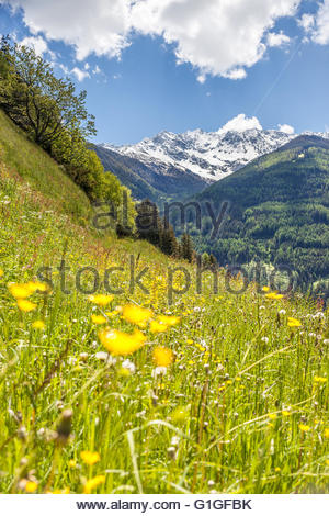 Summer meadow on a steep slope in South Tyrol, Italy - Stock Photo