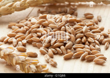 Heap of raw Spelt wheat  on white background - Stock Photo