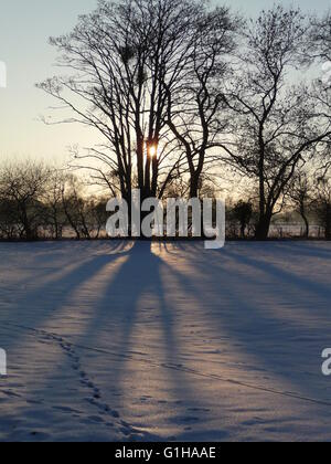 Late afternoon sunlight casting shadows of trees on a snowy field - Stock Photo