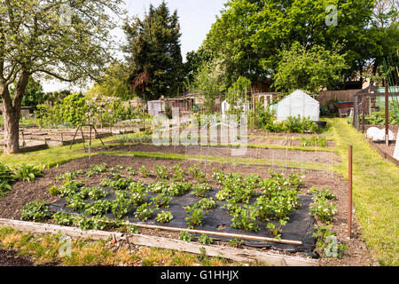 Greenhouse Shed And Raised Beds In The Community Allotment Garden In Stock Photo 50529112 Alamy