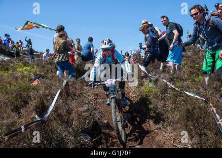 Carrick Mountain, Co Wicklow, Ireland. 15th May, 2016. Emerald Enduro World Series mountain bike downhill racing - Stock Photo