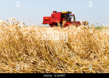 Combine harvesting beer barley on a bright, sunny day - Stock Photo
