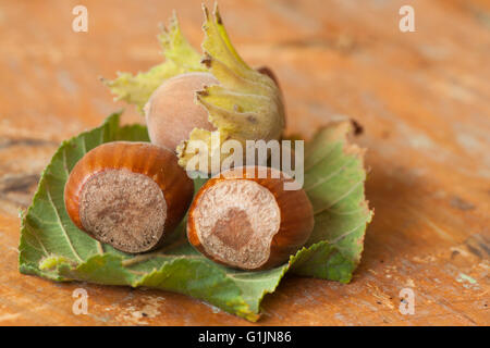 Hazelnuts on wooden table - Stock Photo