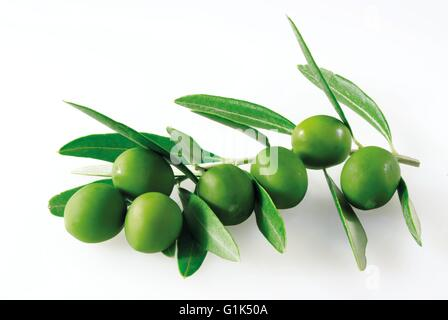 Close up of fresh picked green olives on a branch with leaves - white background cut out - Stock Photo