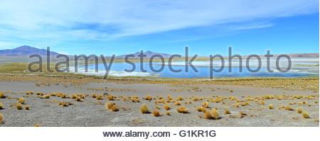 Tara Lake panoramic view, Los Flamingos National Reserve, Chile - Stock Photo