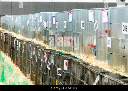 Chickens in cages at an agricultural show. - Stock Photo