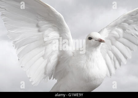 Stuffed white dove in flight against cloudy sky - Stock Photo