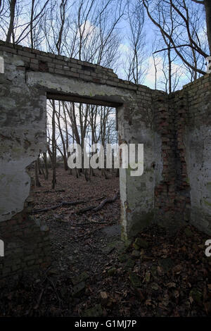 Look through the entrance of a ruined house in the forest with a creative upward perspective including the blue - Stock Photo