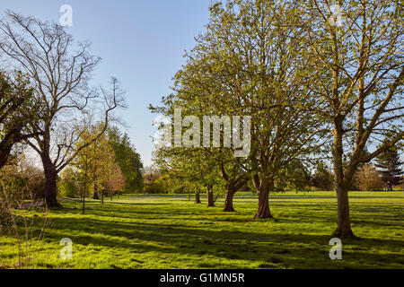 Hurst Meadows, West Molesey, Surrey, England. - Stock Photo
