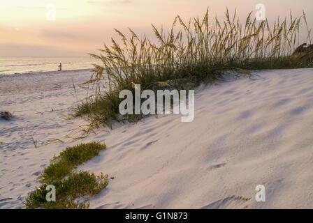 Sea Oats in dunes, St. Joseph's Peninsula State Park, FL. - Stock Photo