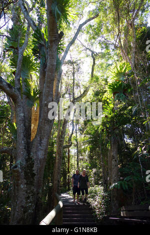 Couple walking amongst rainforest in Kondalilla National Park, Sunshine Coast, Queensland, Australia. No MR - Stock Photo