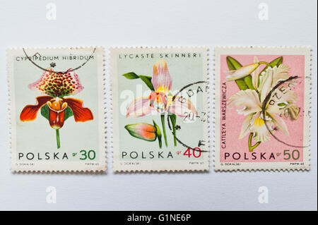 UZHGOROD, UKRAINE - CIRCA MAY, 2016: Collection of postage stamps printed in Poland, shows orchid flowers, circa - Stock Photo