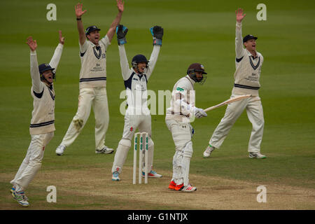 London, UK. 17   May 2016. Ravi Rampaul is out batting for Surrey. and Ollie Rayner has his 6th wicket of the innings - Stock Photo
