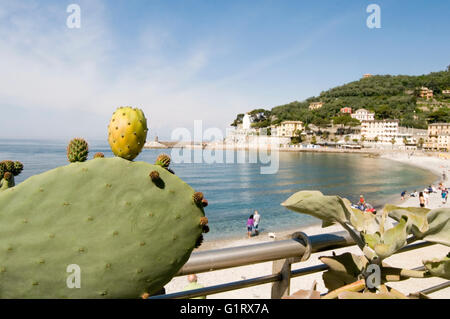 Recco small Italian fishing village  tourist resort on the west side of the peninsula of Portofino, Golfo Paradiso - Stock Photo