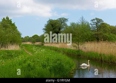 Carlton Marshes a Suffolk Wildlife Trust nature reserve, near Lowestoft, Suffolk, England UK - Stock Photo