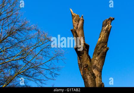 Abstract dead tree against a blue sky on Hampstead Heath, London, UK. - Stock Photo