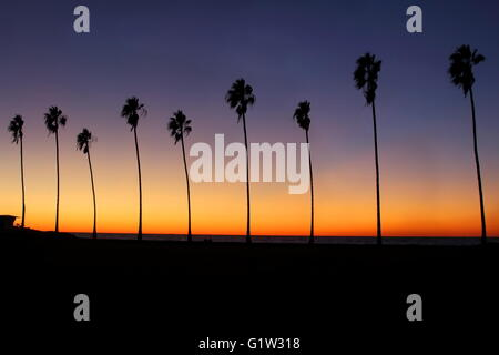 Palm Trees at Sunset - Row of palm trees silhouettes during a colorful sunset at the beach in California - Stock Photo