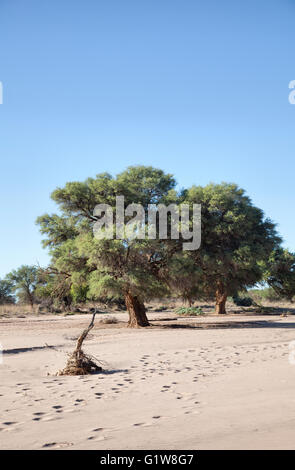 Altekalkofen Lodge Dry River Bed near Keetmanshoop in Namibia - Stock Photo