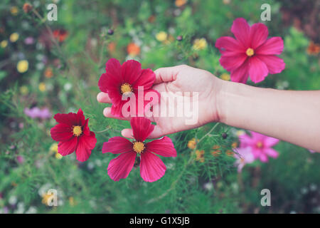 A young woman is picking flowers in a meadow during summer - Stock Photo