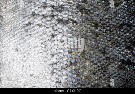 Fresh salmon skin texture, close up - Stock Photo