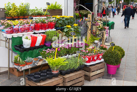 Floral, florist, flower, flower shop, retail, working, front view, occupation, small business, entrepreneur, horizontal, - Stock Photo