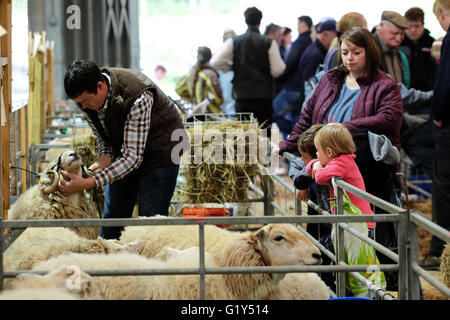 Royal Welsh Spring Festival, Saturday 21st May 2016 - Opening day of the weekend Spring Festival - Young children - Stock Photo