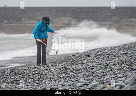 Aberystwyth Wales UK, Saturday 21 May 2016  UK weather:  A hardy  woman volunteer comes out in the rain on a wet - Stock Photo