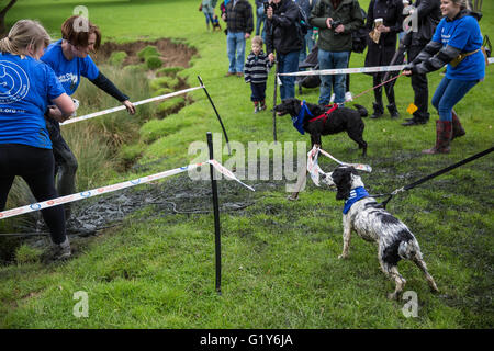 Muddy Dog Challenge At Windsor Great Park