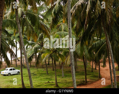 An Ambassador parked under palm trees on Varkala Beach, Kerala, South India. - Stock Photo