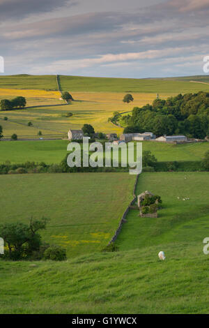 View over hillside farm and fields on a summer evening - Wharfe Valley  near Burnsall - Yorkshire Dales National - Stock Photo