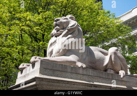 One of the stone lions in front of the main branch of the New York Public Library on Fifth Avenue in New York City - Stock Photo