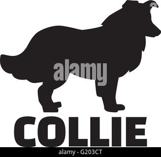Collie with breed name - Stock Photo