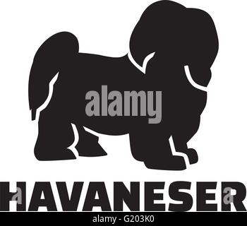 Havanese with german breed name - Stock Photo