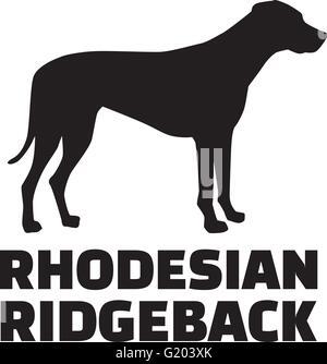 Rhodesian ridgeback with breed name - Stock Photo
