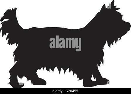 Yorkshire Terrier dog - Stock Photo