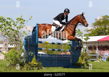 Sir Mark Todd (New Zealand) riding Leonidas II in the show jumping at the Mitsubishi Motors Badminton Horse Trails - Stock Photo