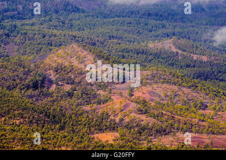 Pine forests, view from Teide Volcano in Tenerife, Spain. - Stock Photo