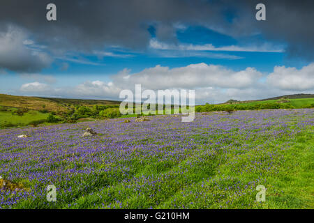 Wild meadow and hills with bluebells in westcountry in UK - Stock Photo