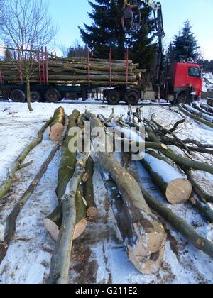 Czech Republic, Poldovka. Freshly felled beech logs being loaded onto truck for transport - Stock Photo