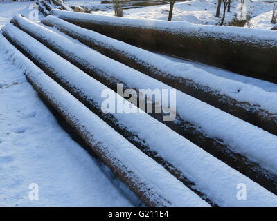 Czech Republic, Poldovka. Logs of freshly felled spruce logs covered by snow - Stock Photo