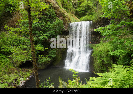 Lower South Falls, with family of hikers on trail behind the waterfall; Silver Falls State Park, Oregon. - Stock Photo
