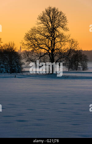 Tree in winter landscape, sunset, Unteregg, Unterallgäu District, Bavaria, Germany Stock Photo