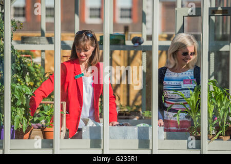 London, UK. 23rd May, 2016. Working in greenhouses. Credit:  Guy Bell/Alamy Live News - Stock Photo