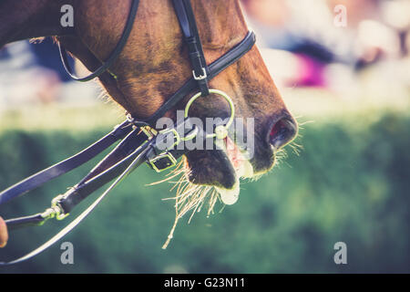 exhausted horse - Stock Photo