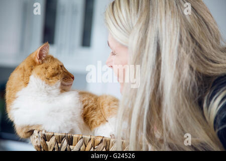 An orange tabby lying in a wicker basket receiving attention. Close up. - Stock Photo
