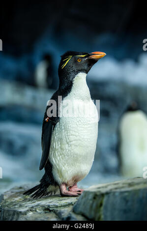 penguins in zoo